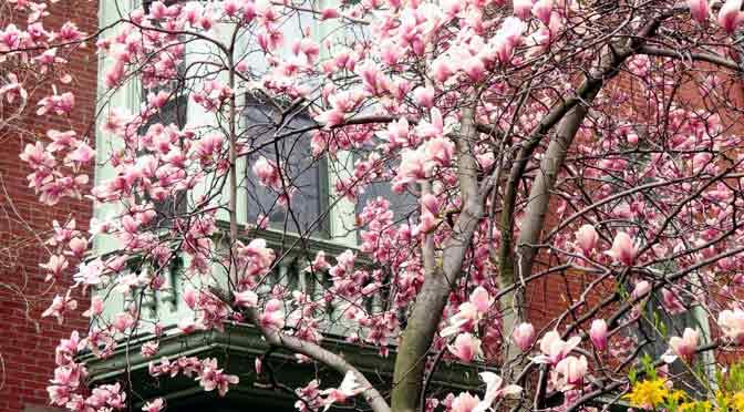Las flores de Boston