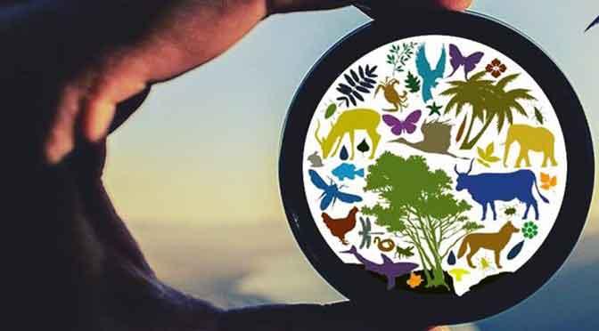 Concurso de fotografía de Iniciar for Global Action sobre medio ambiente y biodiversidad