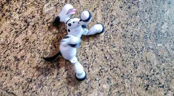 Mascotas artificiales en el centro comercial de Luohu